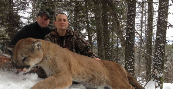d60ecaaa70fa Mountain lion hunting in British Columbia