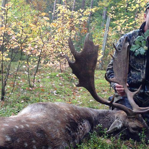 Hunting in Poland | Hunts for Roebuck, Fallow Buck, Wild