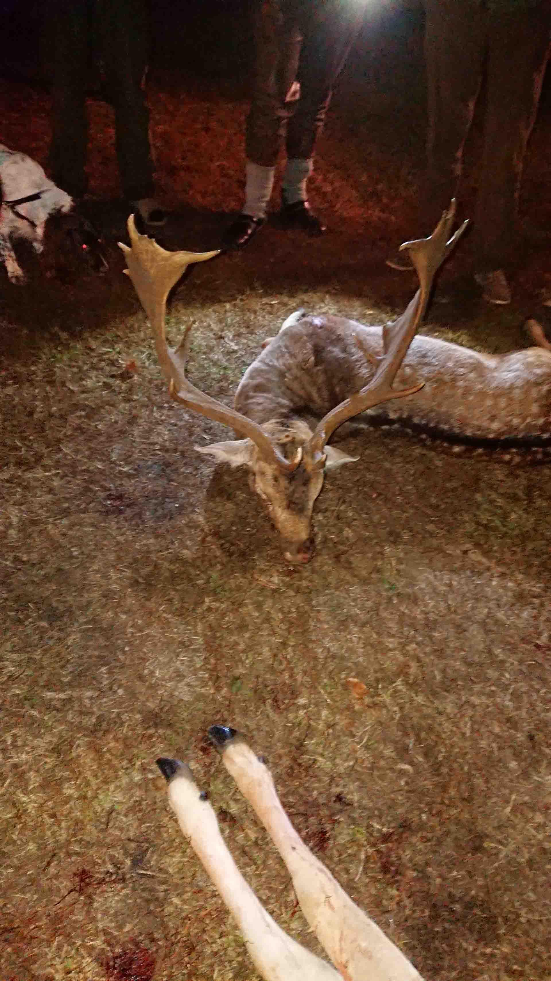 Hunting in Poland   Hunts for Roebuck, Fallow Buck, Wild